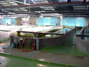 魚類棟 稚魚の飼育