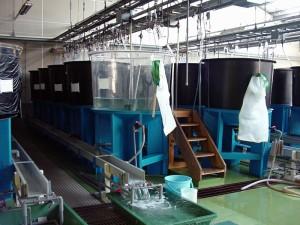 魚類棟 アルテミアのふ化管理