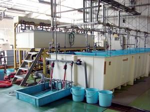 魚類棟 栄養強化水槽