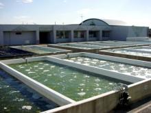 クロレラ水槽