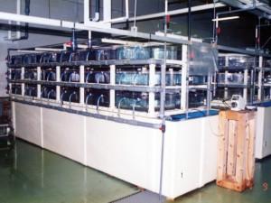 二枚貝棟 稚貝飼育室 多段式水槽での稚貝飼育