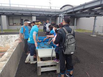 タッチ水槽で魚に触れる子供たち